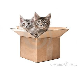 two-small-kittens-cardboard-box-19364447